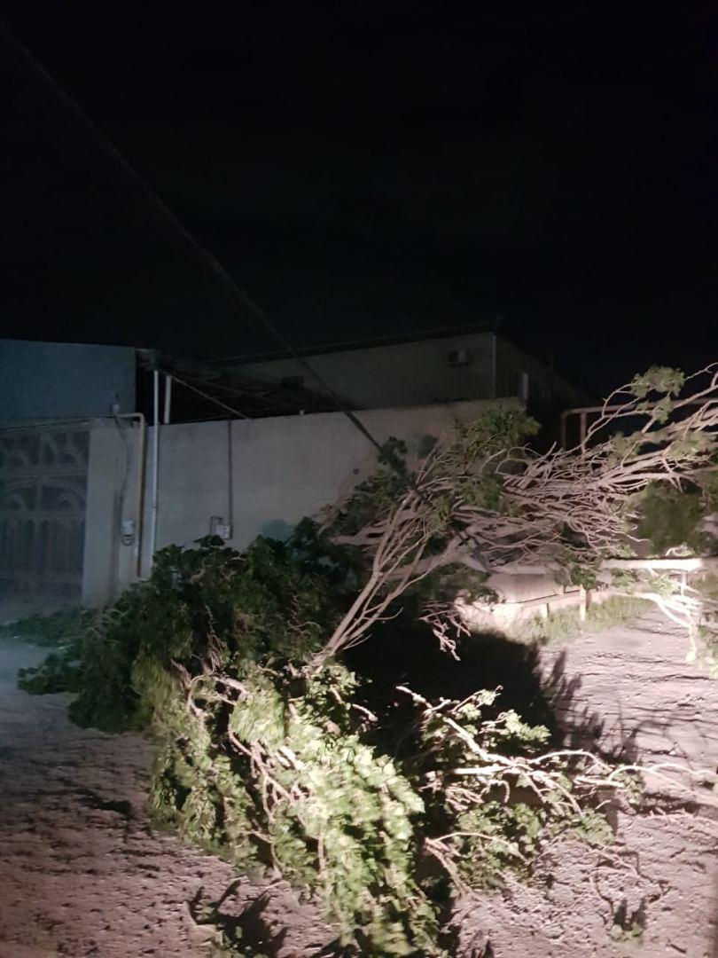 Bakıda güclü külək ağacları aşırıb (FOTO) - Gallery Image