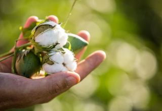 Azerbaijani companies sign contracts with farmers for sowing cotton