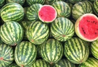Iran's watermelon exporters in Turkey face dilemma, as business suffers