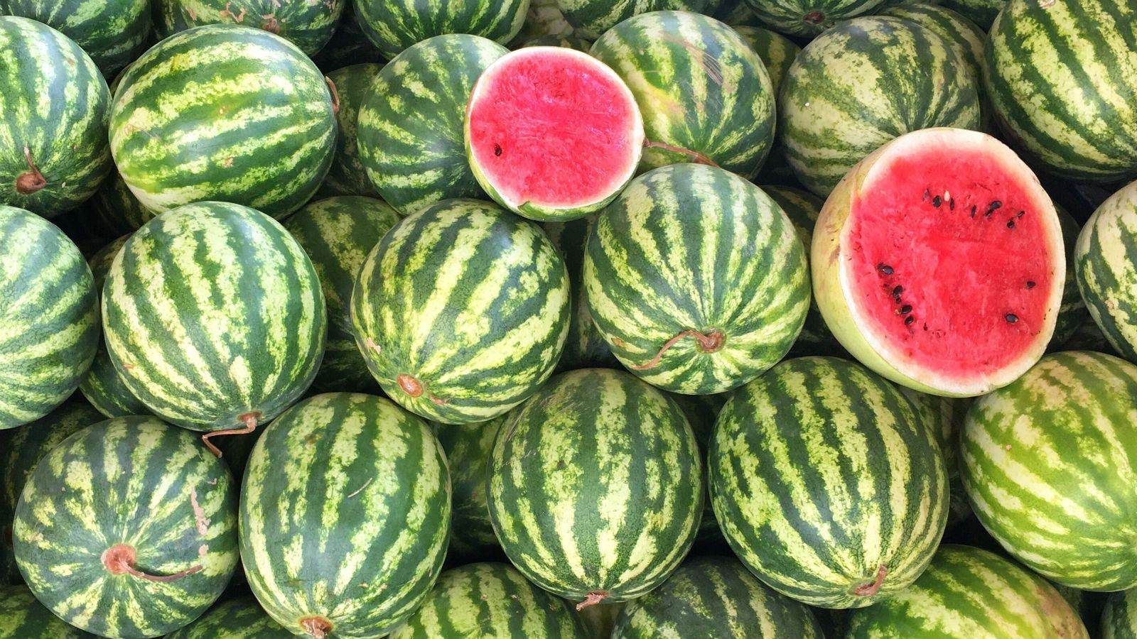 Exports of Uzbek watermelons to Russia decreases