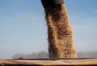 Argentina moves to take over bankrupt soy crusher Vicentin