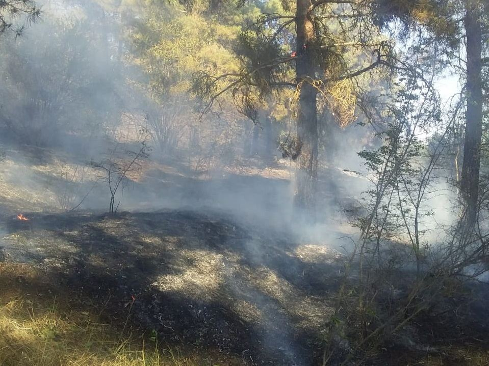 Fire brigade extinguishes fire in Azerbaijan's Goranboy due to Armenian Armed Forces' artillery strikes