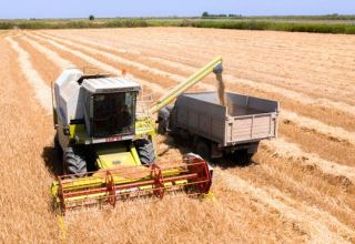 Azerbaijani Agriculture Ministry discloses volume of harvested barley crops