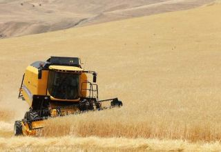 Azerbaijani Agriculture Ministry discloses volume of harvested cereal crops