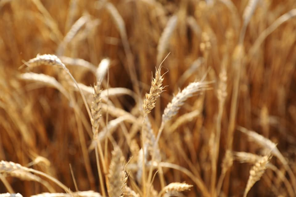 Georgia increases import of grains and legumes from Turkey