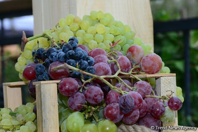 Georgia reveals total projected harvest of grapes in 2020