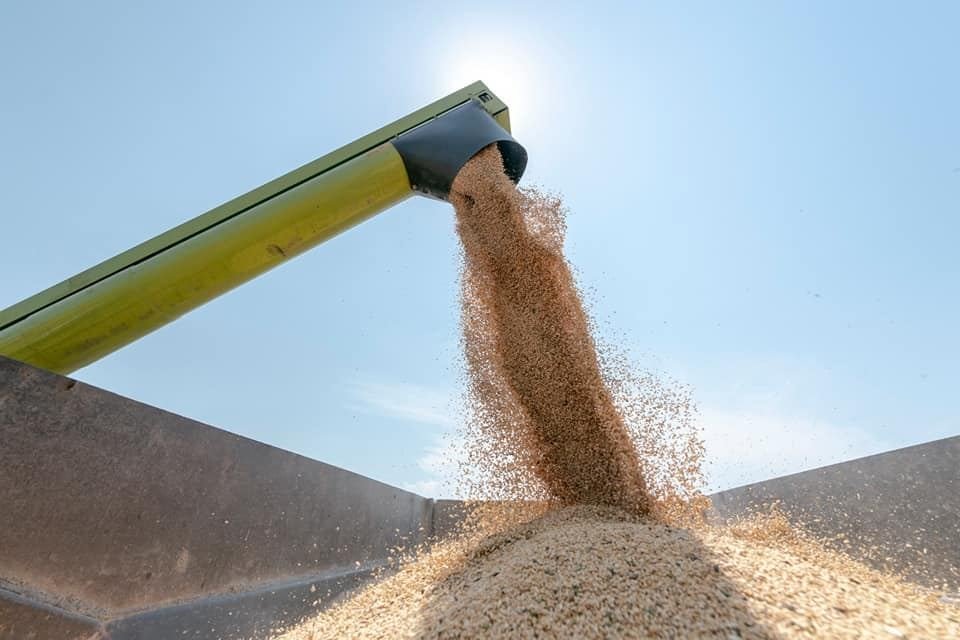 Georgia slightly ups import of grain, legumes from Turkey