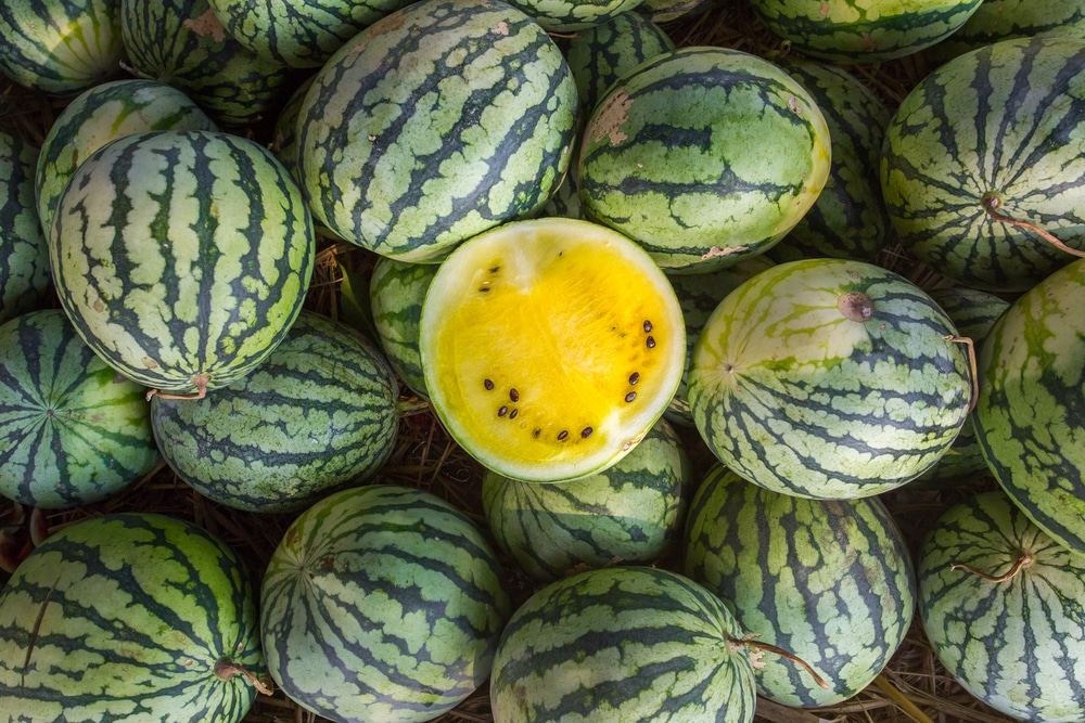 Uzbek company starts exporting of yellow watermelons to Russia