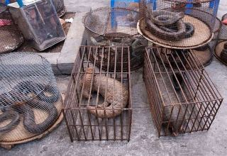 Vietnam bans wildlife trade to curb risk of pandemics