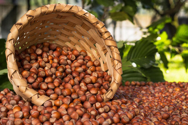 First batch of hazelnuts to be exported from Georgia to Germany