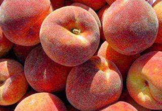 Peach export in Uzbekistan up