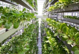 Dutch company plans to introduce vertical farming technology in Uzbekistan