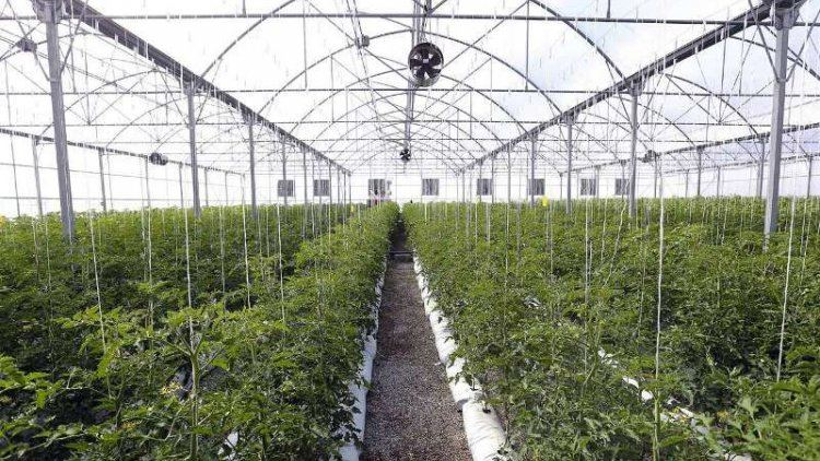 Network of greenhouses expanding in Turkmenistan's Dashoguz region