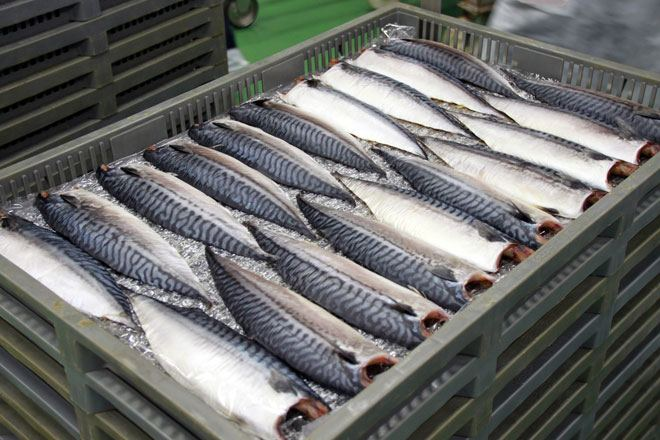 Georgia increases export of fats, oils and their fractions of fish or marine mammals to Turkey