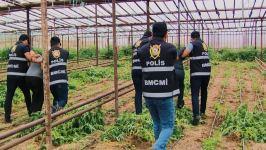 Polis əməliyyat keçirdi: 1 tona yaxın narkotik aşkarlandı (FOTO/VİDEO) - Gallery Thumbnail