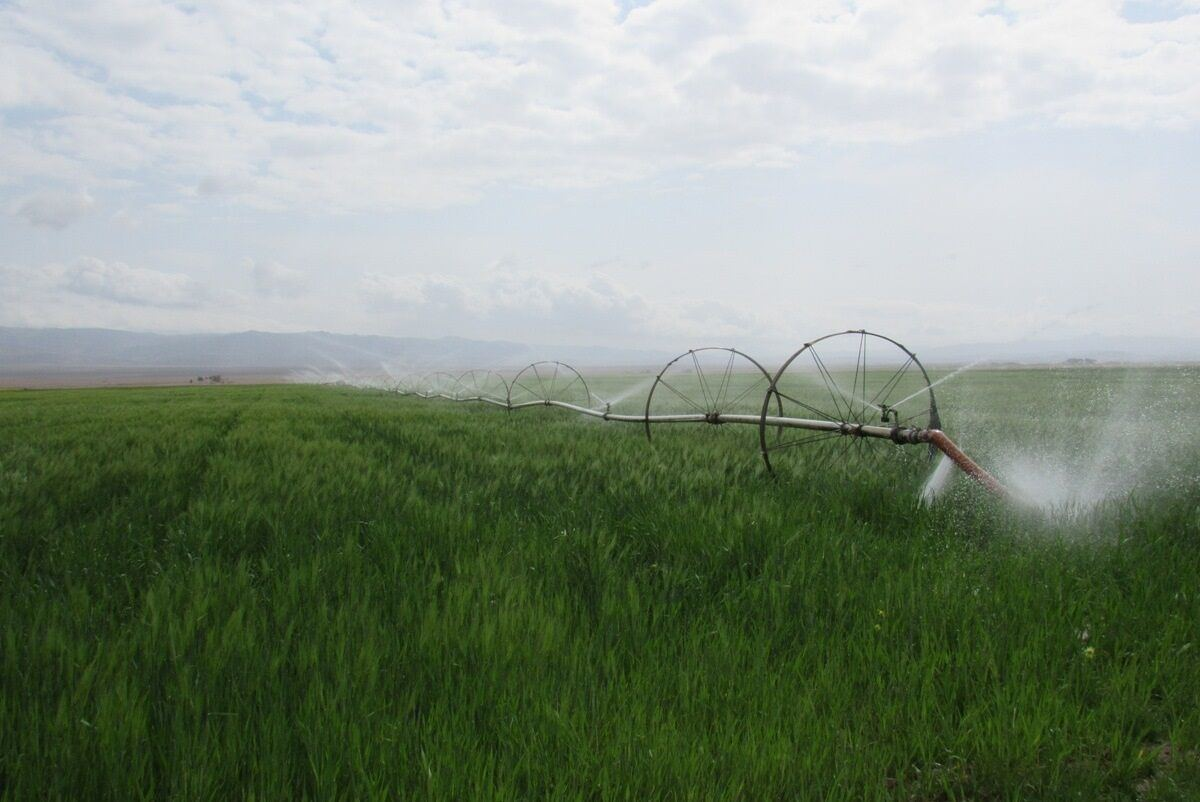 Agricultural work carried out in Turkmenistan's Akhal region