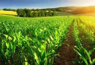 Growth rate of agricultural production in Turkmenistan increases