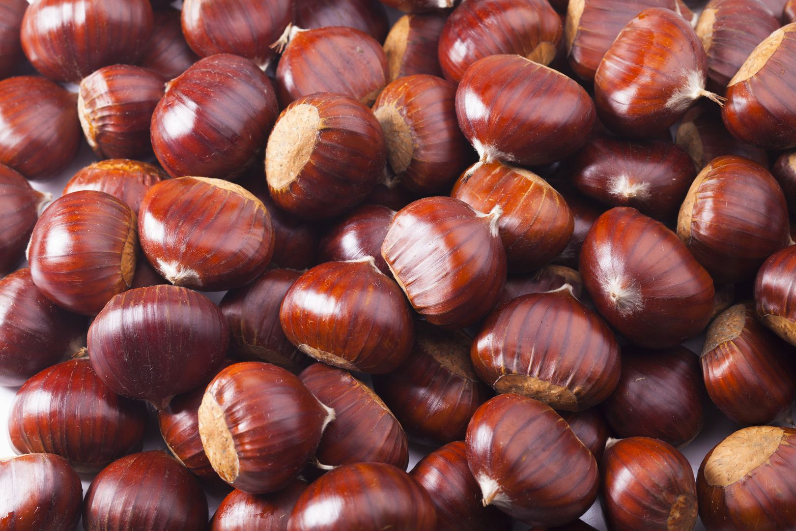 Georgian Chestnuts Export plans to open production of chestnut flour