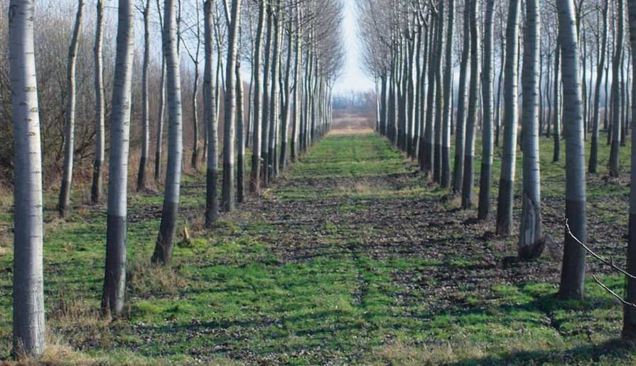 Uzbekistan to attract carbon credits to create forest plantations