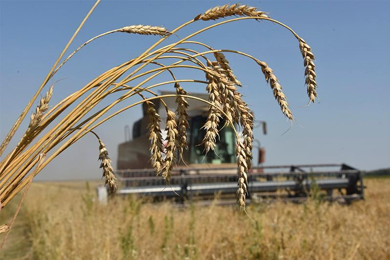 Turkmenistan's Agriculture Ministry exceeds production plan in 2020
