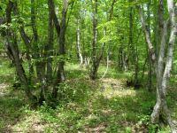 Армения совершает экологический террор против Азербайджана - минэкологии (ФОТО) - Gallery Thumbnail