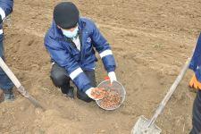 В освобожденном от оккупации Агдаме посажено около 1000 различных пород деревьев (ФОТО) - Gallery Thumbnail