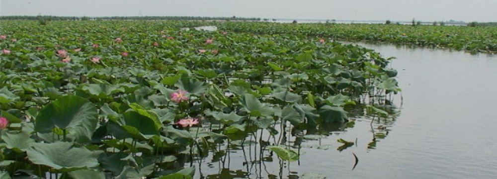 Iran to allocate funds for the rehabilitation of Anzali Wetland