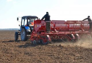 Azerbaijan discloses area of liberated lands sown with wheat in Aghdam