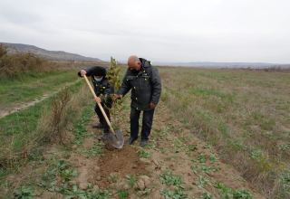 Tree-planting campaign continues in Azerbaijan's Gubadli (PHOTO)