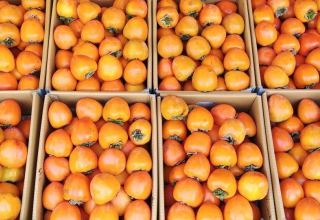 Georgia sees increase in persimmon and caraway seeds export