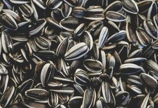 Uzbekistan discloses processing capacity of sunflower seeds by 2022