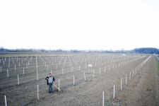 Azerbaijan planting fruit trees for low-income families within Social Gardens project (PHOTO) - Gallery Thumbnail