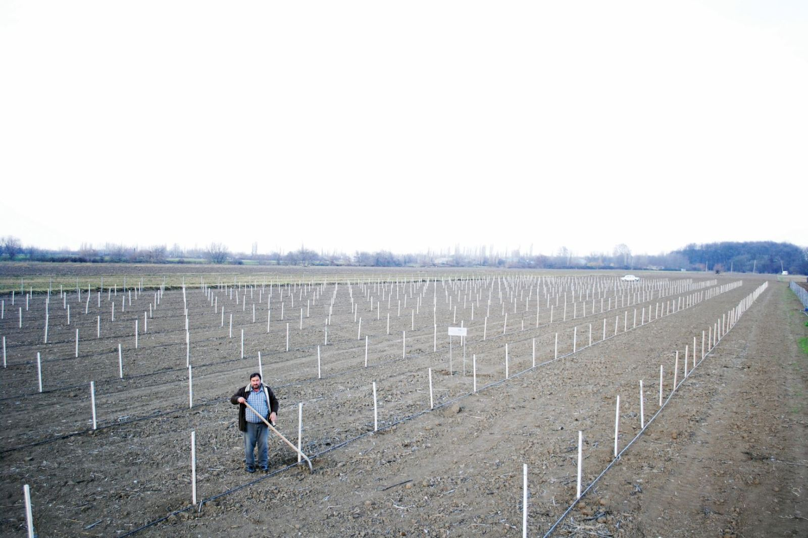 Azerbaijan planting fruit trees for low-income families within Social Gardens project (PHOTO) - Gallery Image