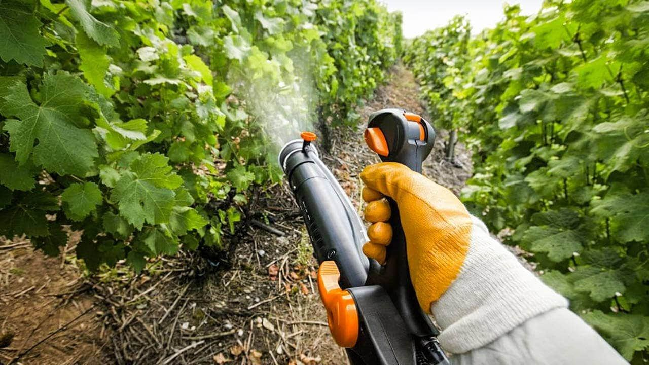 Turkmen Ministry of Agriculture opens tender for purchase of plant protection products