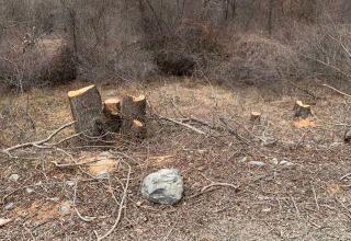 Azerbaijani ministry discusses damage to Kalbajar's flora caused by Armenia (PHOTO/VIDEO)