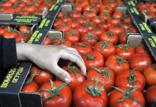 No virus detected in Azerbaijan's tomatoes export in 2020 - Food Safety Agency