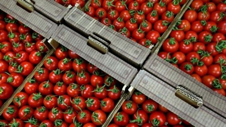 Russia allows imports of peppers tomatoes from one more Kazakh venture