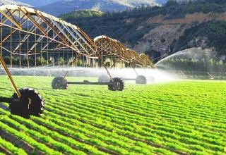 Japan eyes to support development of Georgian agrarian potential