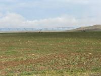 Sowing of grain begins in Azerbaijan's Jabrayil - Trend TV - Gallery Thumbnail