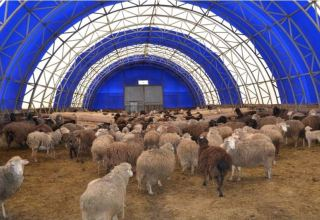 Karaganda region to build mega sheep farm
