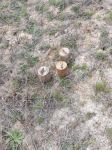Numerous mines found and neutralized in Azerbaijan's Khojavend district (PHOTO) - Gallery Thumbnail