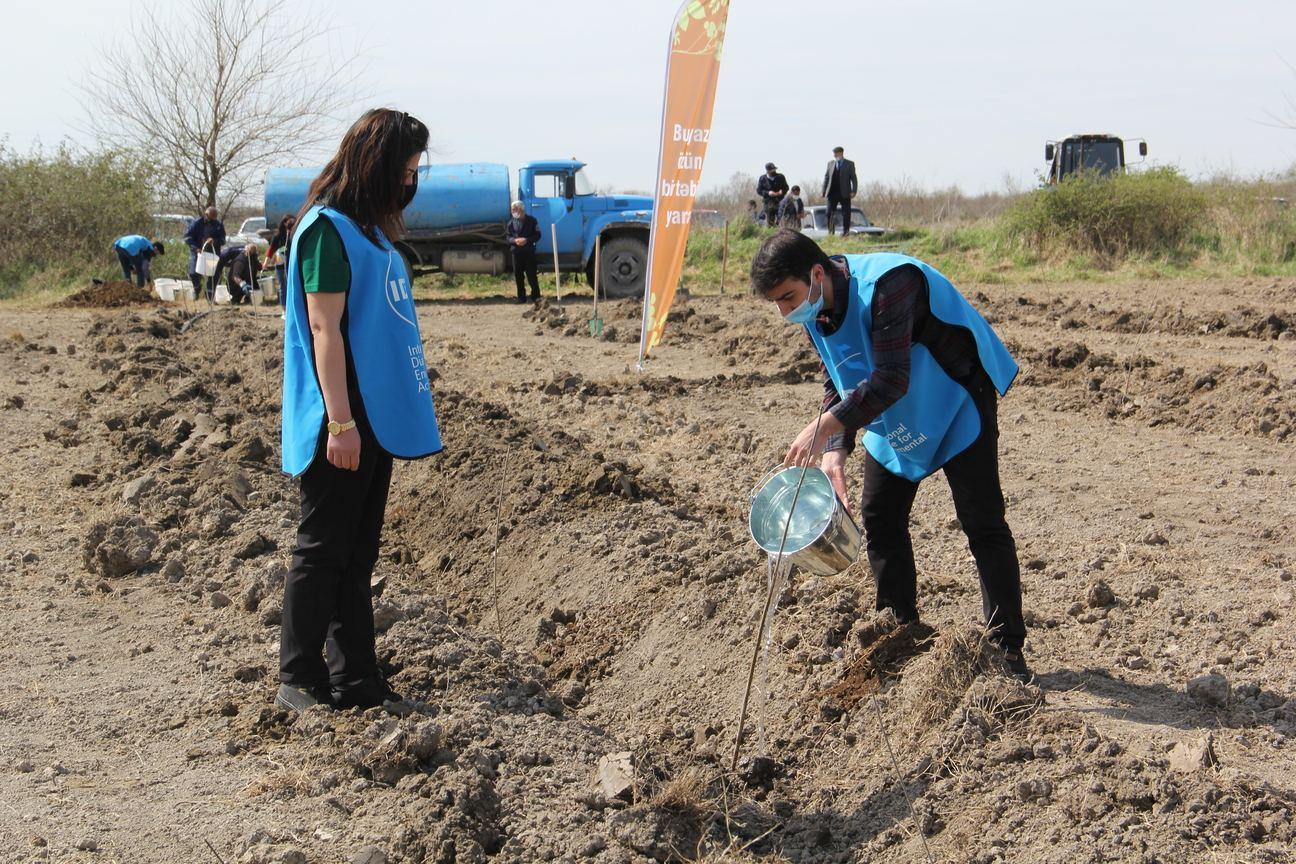 В Азербайджане стартовала  кампания по посадке деревьев  «Зеленый марафон» (ФОТО) - Gallery Image