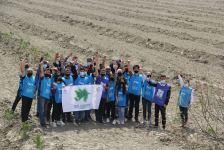 В Азербайджане в рамках проекта «Зеленый марафон» посажены медоносные деревья - Gallery Thumbnail