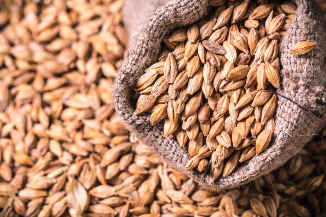 USDA unveils forecast for Azerbaijan's barley production