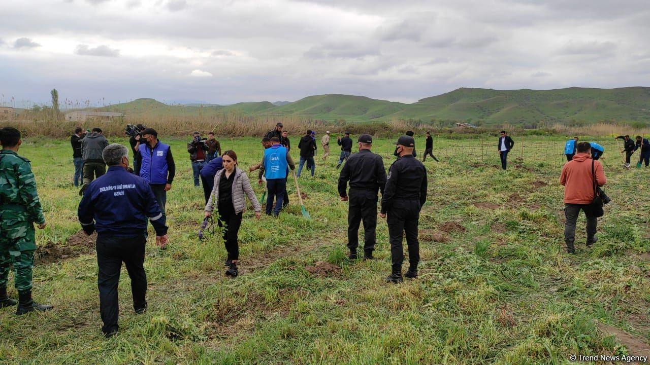 В Джебраильском и Губадлинском районах посажено около 750 деревьев (ФОТО/ВИДЕО)