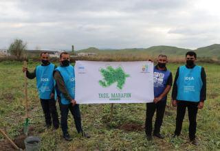 """В рамках """"Зеленого марафона"""" в Губадлинском районе посажено 750 деревьев (ФОТО)"""