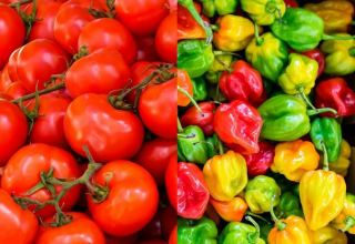 Russia allows supply of peppers, tomatoes from some Uzbek enterprises