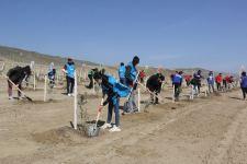 В Баку в рамках проекта «Зеленый марафон» прошла акция по посадке деревьев (ФОТО) - Gallery Thumbnail