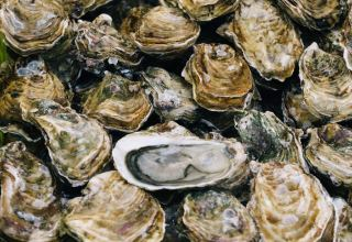 Russia and Azerbaijan interested in Georgian mussels and oysters