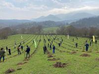 Bu il ölkə ərazisində 400 mindən artıq meşəcinsli ağac əkilib (FOTO) - Gallery Thumbnail